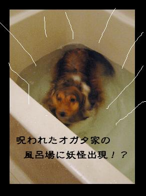 Dsc_0296_fv_02